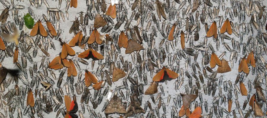 Moth Epiphany