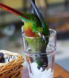 parrot in glass