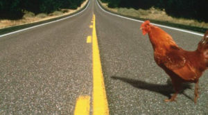 chicken_road_crossing