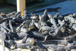 pile of crocs